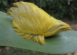 Donald's toupee